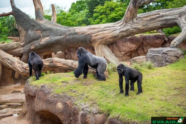 Vườn thú là nơi chiêm ngưỡng cảnh đẹp và gặp gỡ với những con thú ngộ nghĩnh