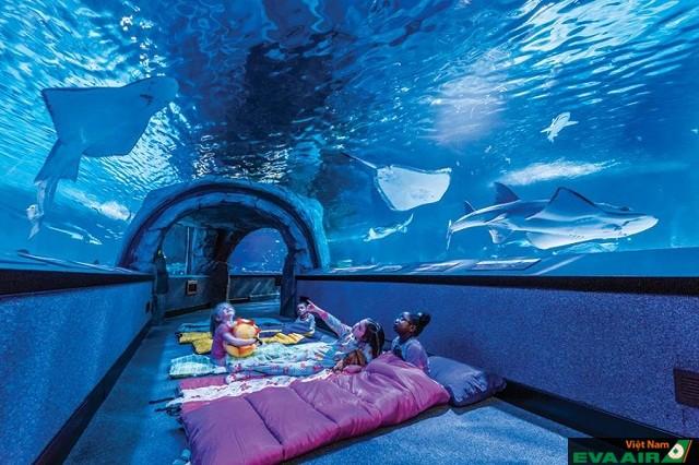 Nghỉ qua đêm Downtown Aquarium cũng là trải nghiệm ấn tượng khi đến Houston