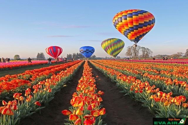 Vườn tulip với đủ loại sắc màu đẹp không kém cạnh vườn hoa Hà Lan