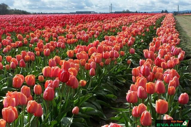 Du khách sẽ mãn nhãn với vô số các loài hoa đủ chủng loại và đa sắc màu rực rỡ