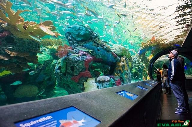 Thủy cung Ripley là nơi bạn khám phá thế giới dưới nước và tận mắt ngắm nhìn hơn 16.000 loài động vật thuỷ sinh
