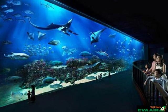 Thủy cung Dallas World Aquarium – nơi thu hút đông đảo du khách đến Dallas