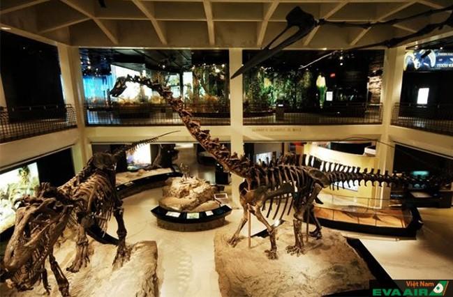 Bộ xương hóa thạch khủng long ở bảo tàng Khoa học Tự nhiên Houston