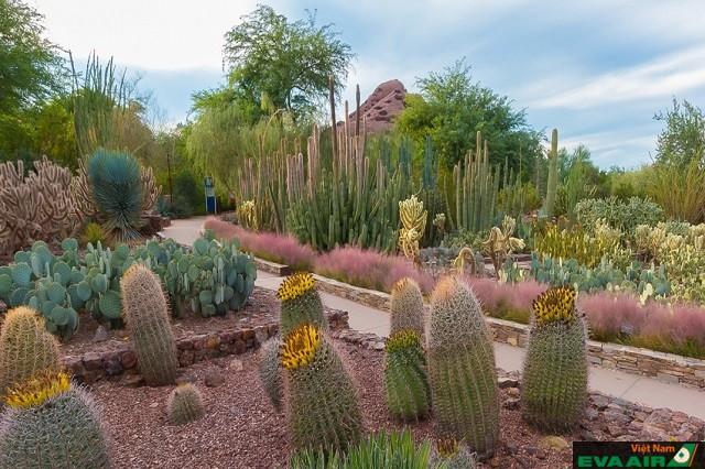 Desert Botanical Garden là nơi bạn tìm thấy những loài cây sống ở môi trường sa mạc