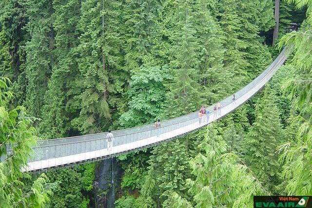 Cầu treo Capilano được xem là biểu tượng du lịch của Vancouver