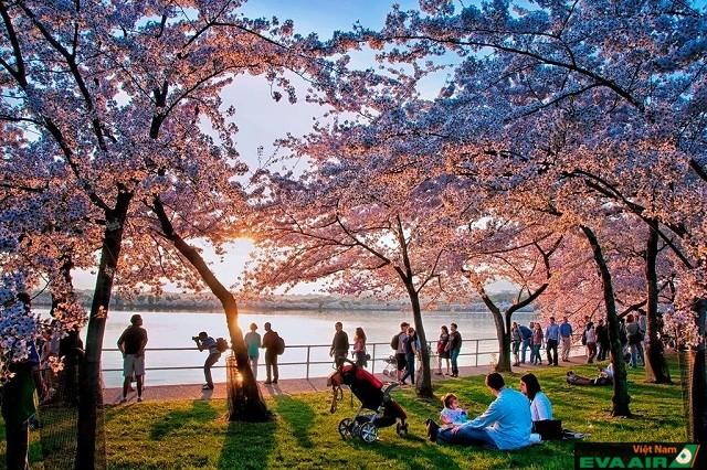 Kết quả hình ảnh cho nước mỹ vào mùa xuân
