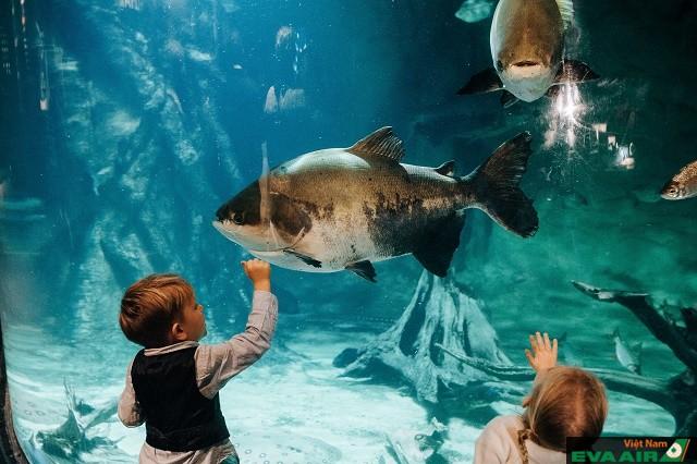 Ngắm sinh vật biển qua bể kính trong thủy cung Vacouver Aquarium
